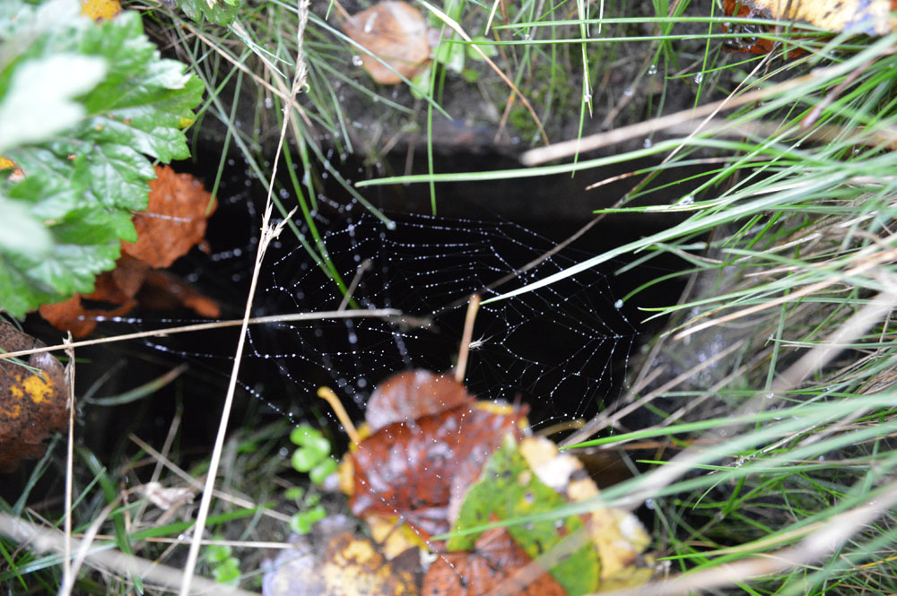 A spider web by the Hole